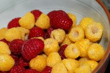 Free Red And Gold Raspberries Royalty Free Stock Photos - 5842978