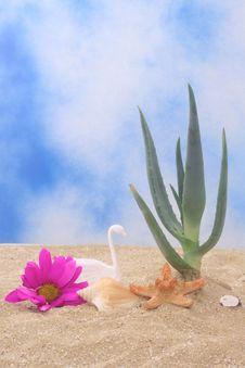 Free Aloe Plant Stock Photos - 5843683