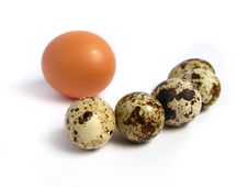Free Chicken And Quail Eggs Royalty Free Stock Photos - 5843998