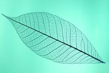Free Leaf Detail Royalty Free Stock Photos - 5845538