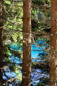 Pine Tree Trunks On Blue Lake Royalty Free Stock Photos