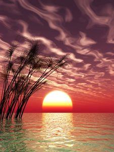 Free Water Grass Stock Image - 5846181