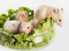 Free Escape From The Salad Stock Photos - 5846203
