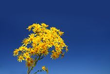 Free Yellow Flower Bunch Stock Photography - 5847172