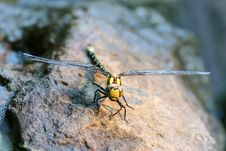 Free Dragonfly Drying Stock Images - 5847604