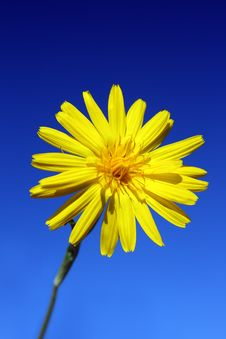 Free Yellow Flower Under Sky Stock Image - 5847781