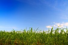Free Green Grass Under Blue Sky Stock Photography - 5848262