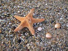 Free Starfish Stock Photography - 5848392