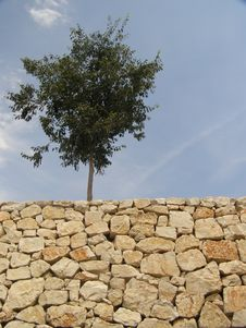 Free Rock And Tree Stock Photography - 5848602