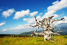 Free Old Tree Royalty Free Stock Photography - 5848777