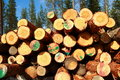 Free Cut Logs At The Edge Of The Forest Royalty Free Stock Photos - 5855348