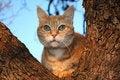 Free Cat In Tree Stock Photos - 5855633