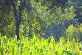Free Vegetation Royalty Free Stock Image - 5859366