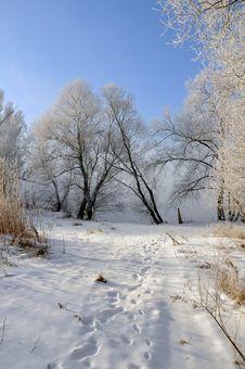 Free Winter Landscape Royalty Free Stock Photos - 5850248