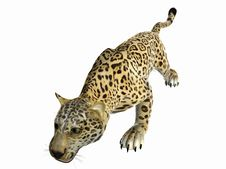 Free Stalking Jaguar Stock Photos - 5850373