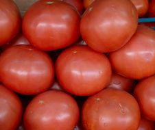 Free Red Tomatoes On The Market Royalty Free Stock Photography - 5850447