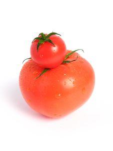 Free Tomato Comparison Stock Images - 5852734