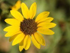 Free Sun Flower Stock Photos - 5853193