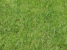 Free Background  Lawn Royalty Free Stock Photo - 5854575