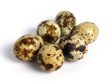 Free Quail Eggs Stock Photos - 5854853