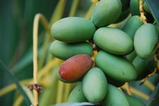 Free Green Olives Stock Photography - 5854912