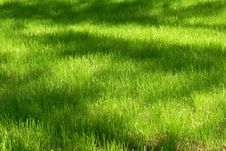 Free Green Lawn With A Shadows From Trees Stock Photos - 5855423