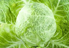 Free Cabbage Stock Images - 5855454