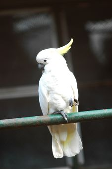 Free Parrot Royalty Free Stock Images - 5855639