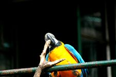 Free Parrot Royalty Free Stock Photos - 5855688