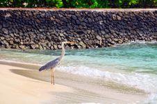 Free Grey Heron At The Beach Stock Image - 5855691