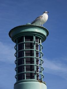 Free Seagull Stock Image - 5855831