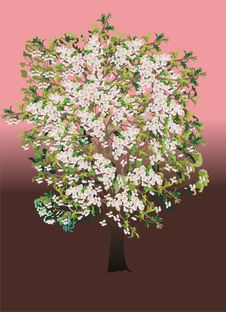 Free Tree With Flowers Illustration Stock Photo - 5855890