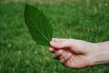 Free Leaf In Hand Stock Image - 5856071