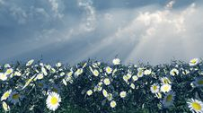 Free Beautiful Flowers Stock Photo - 5856610