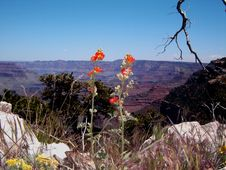 Free Grand Canyon Stock Photos - 5856793