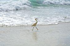 Free Snowy Egret Stock Image - 5856871