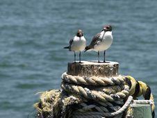 Free Seagull Couple Horizontal Stock Photos - 5857253