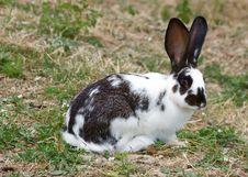Free Bunny Stock Photo - 5857830