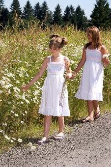 Free Strollin By In A Field Of Daisies Stock Images - 5858644