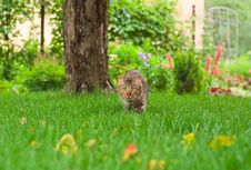Free Cat Is Hunting Stock Photography - 5859922