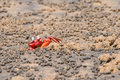 Free Red Crab Hiding In Sand Hole Royalty Free Stock Image - 5861006