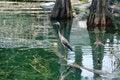 Free Heron At The Park. Royalty Free Stock Image - 5861696