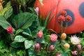 Free Garden Corner Stock Photography - 5866632