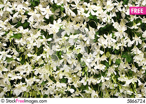 White flower wall free stock images photos 5866724 white flower wall mightylinksfo