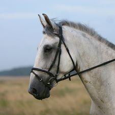 Free Horse Royalty Free Stock Photos - 5860288