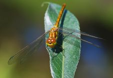 Free Dragonfly-model Stock Image - 5860741