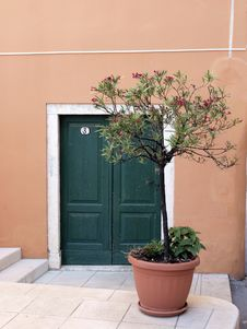Free Door A Flower Royalty Free Stock Image - 5861026