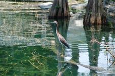 Free Heron At The Park. Royalty Free Stock Image - 5861696