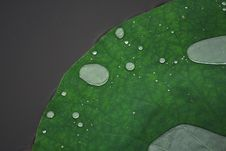 Free Water On Lotus Leaf Stock Photography - 5861742