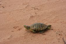 Free Side View Turtle Royalty Free Stock Photography - 5862357